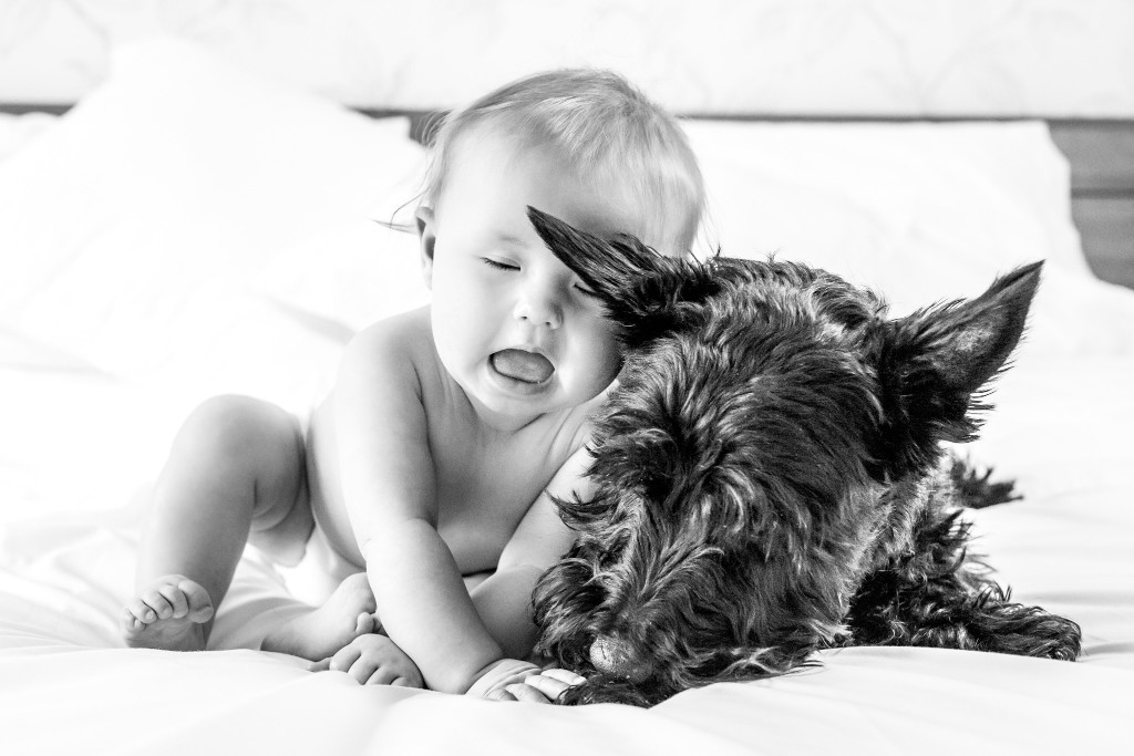 Beautiful black and white photo of a baby resting her head on a Scottish Terrier while sitting on a bed at Kings Langley taken by Hertfordshire family photographer Natalie Chiverton Photography