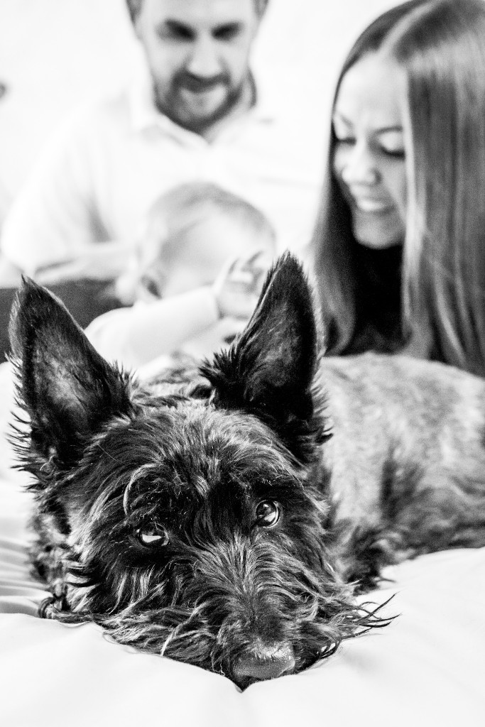 Black and white photo of a Scottish Terrier with his family in the background at Kings Langley taken by Hertfordshire family photographer Natalie Chiverton Photography