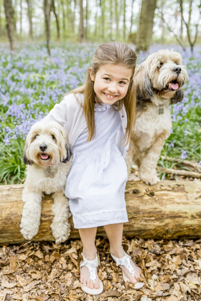 Cute little girl wearing a light blue dress sitting with her two Bolonka dogs on a tree trunk with a field of bluebell shoots in the background