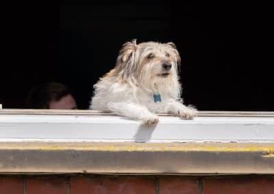 Dog-in-the-window-portrait-in-hertfordshire