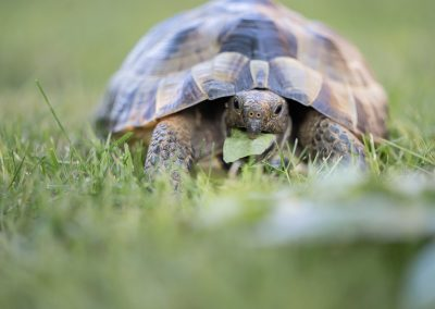 Turtle-on-green-grass